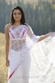 Trisha Krishnan in White Transparent Saree Hot Pics