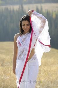 Trisha Krishnan in White Transparent Saree Hot Pics