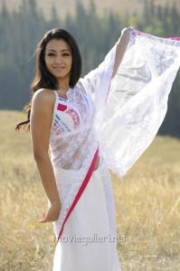 Hot Trisha Krishnan in Saree Stills