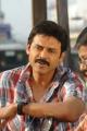 Actor Venkatesh Stills in Seethamma Vakitlo Sirimalle Chettu