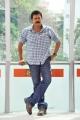 Seethamma Vakitlo Sirimalle Chettu Hero Venkatesh Stills