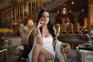 Acterss Celina Jaitley in XYZ Telugu Movie Stills