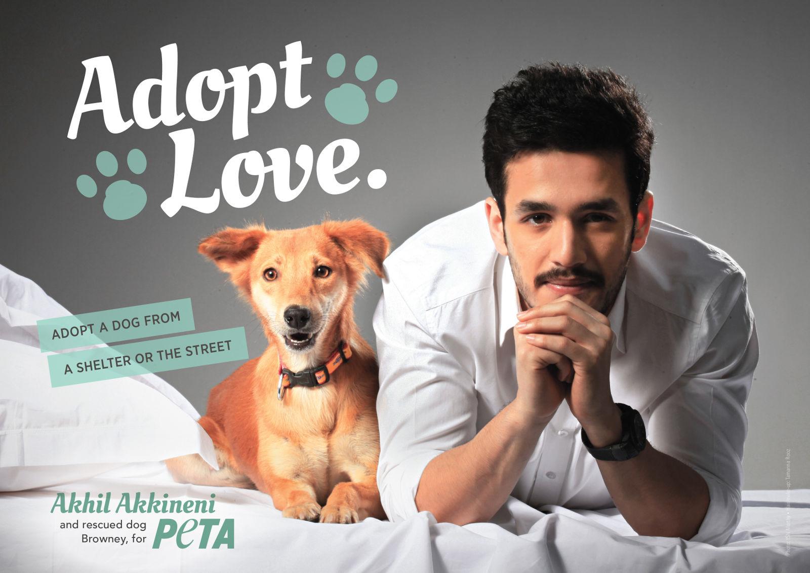 International Dog Adoption